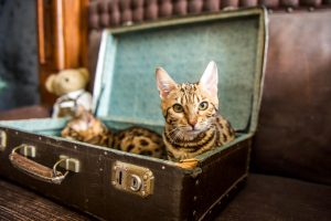 garde de chat