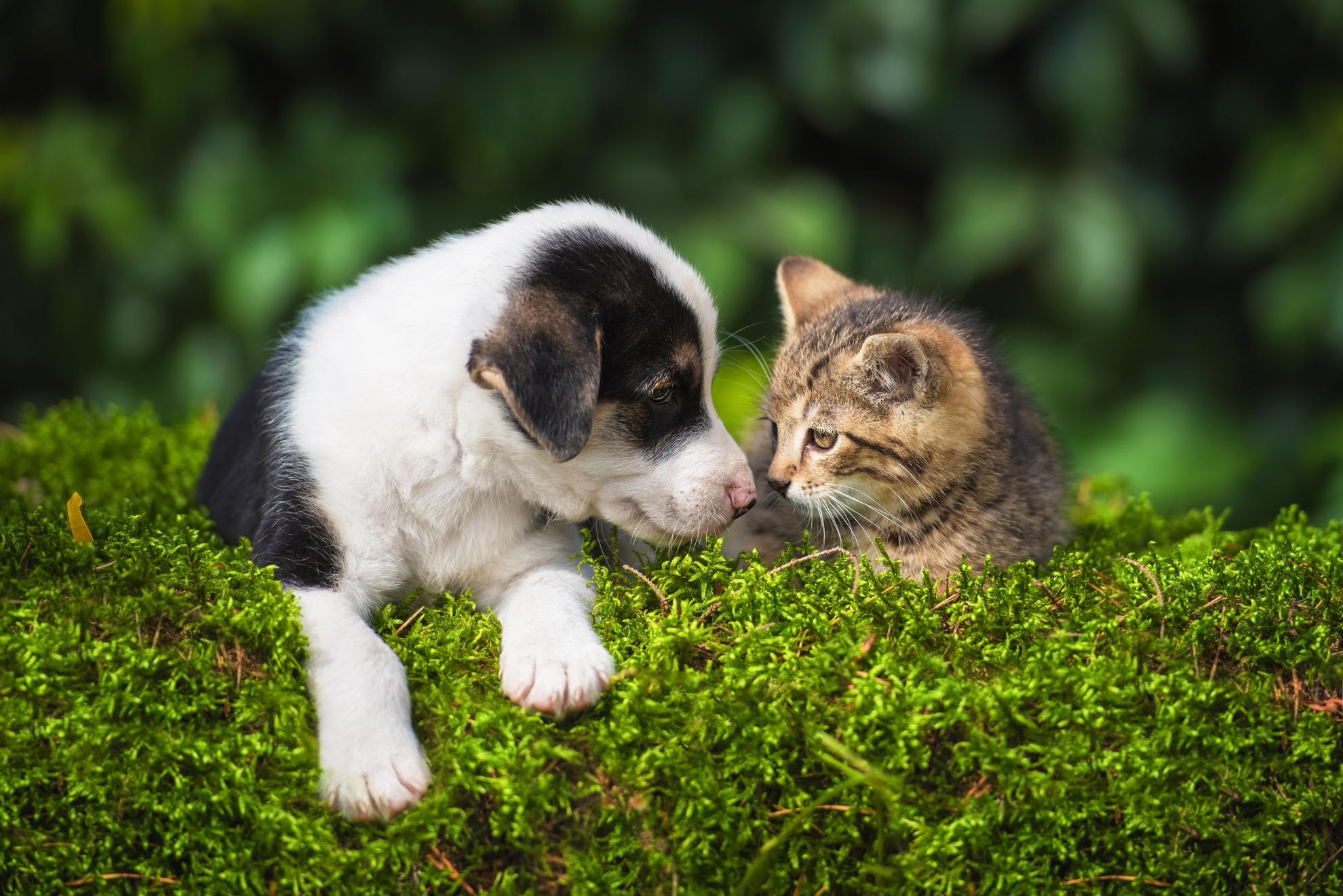 dog et cat pattes