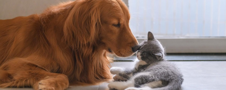 comportementaliste chien chat et éducateur canin