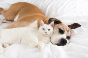 comportement de cohabitation chien chat