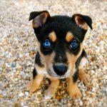 chien chiot comportement conseils adoption