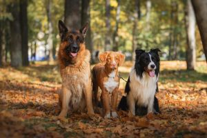chien balade promenade collective