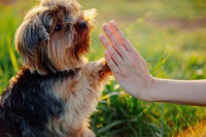 éducation canine dressage chien