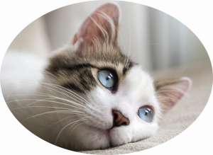 prestations chats comportement garde