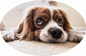 prestations chien comportement dressage promenade