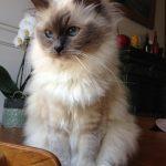 malpropreté miaulements agressivité chat