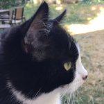adoption chat et chaton
