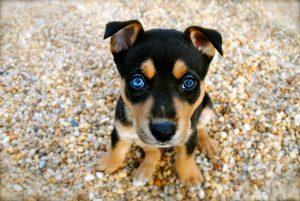 adoption chien chiot conseils propreté