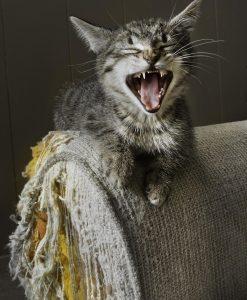 mon chat griffe mon canapé