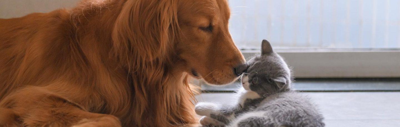 comportementaliste chien et chat