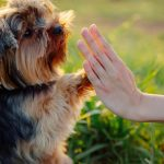 chien éducation canine dressage