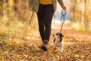 chien promenade individuelle