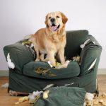 mon chien détruit le canapé
